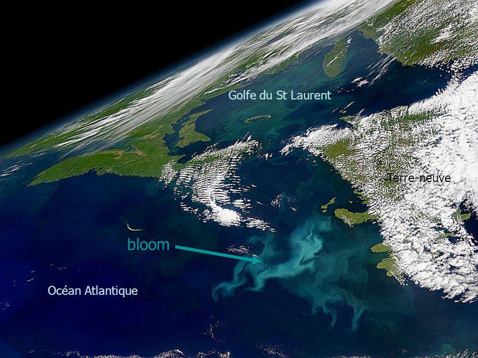 Golfe du St Laurent Terre-neuve bloom Océan Atlantique