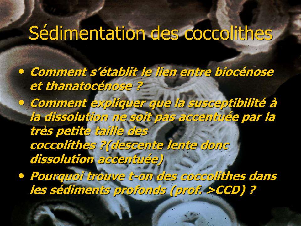 Sédimentation des coccolithes