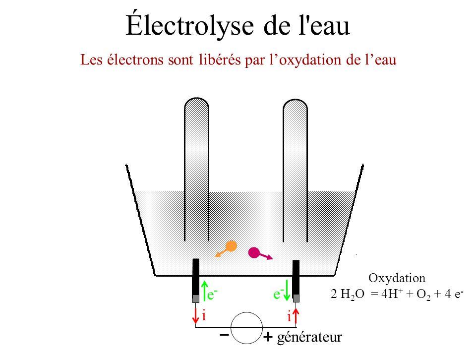Les électrons sont libérés par l'oxydation de l'eau