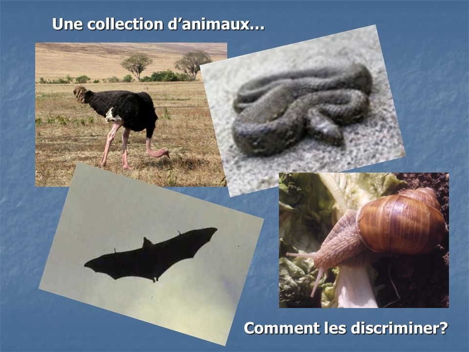 Une collection d'animaux…