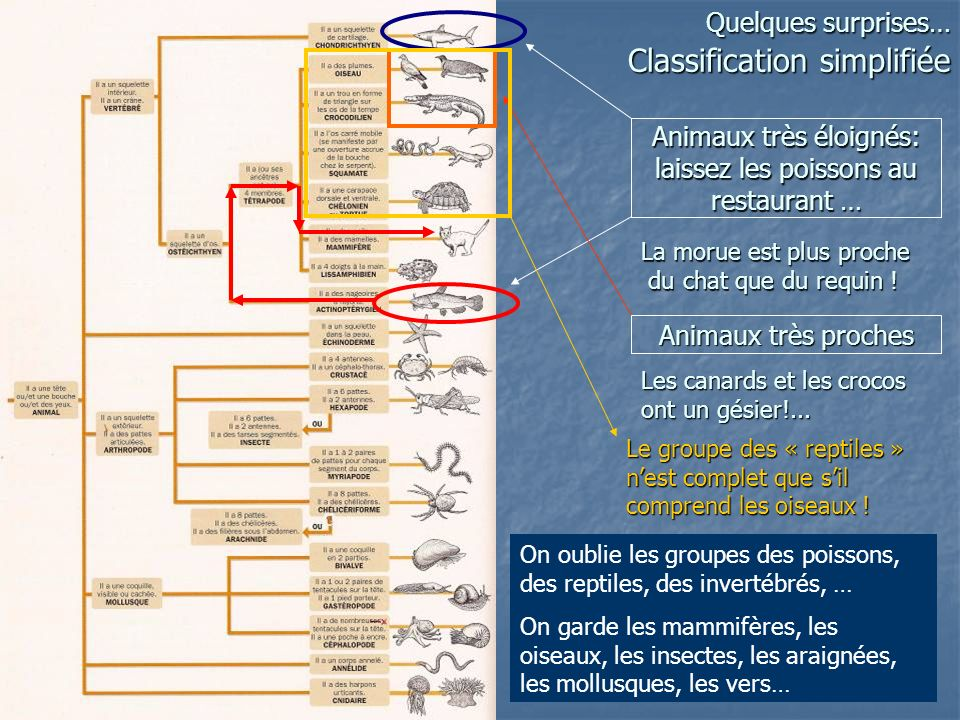 Quelques surprises… Classification simplifiée