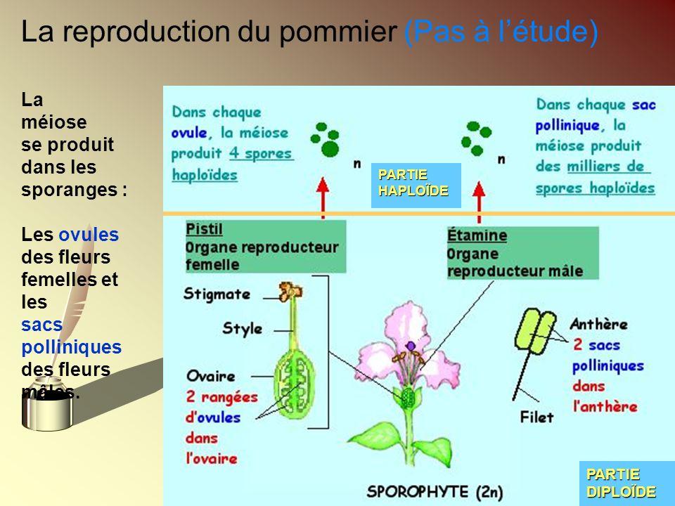 La reproduction du pommier (Pas à l'étude)