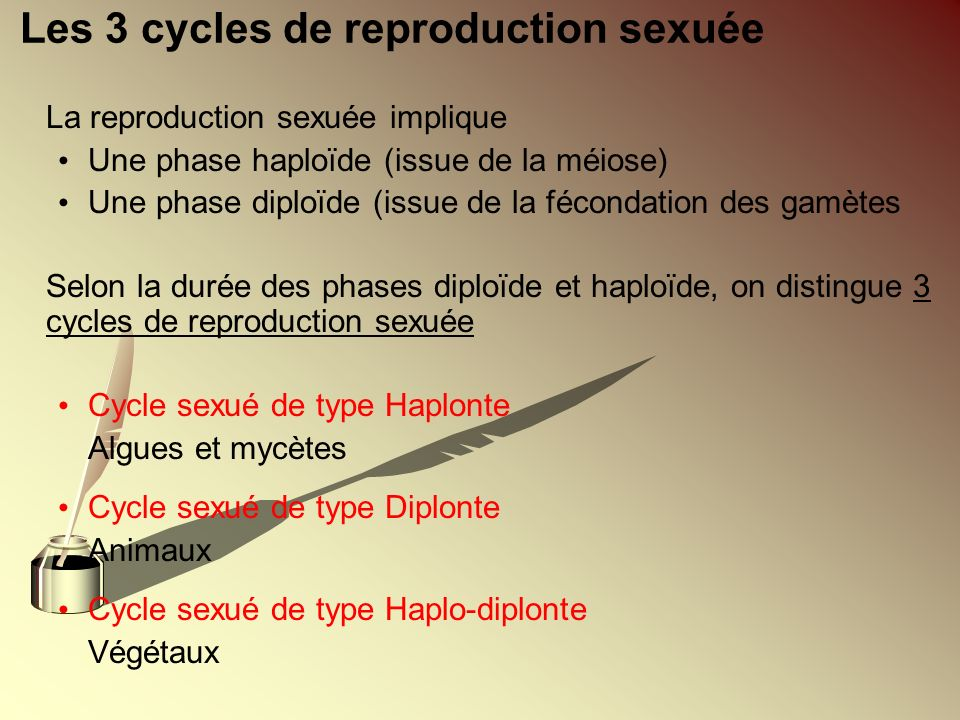 Les 3 cycles de reproduction sexuée