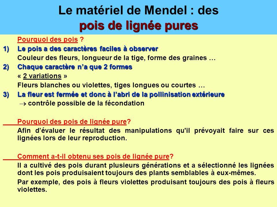 Le matériel de Mendel : des pois de lignée pures