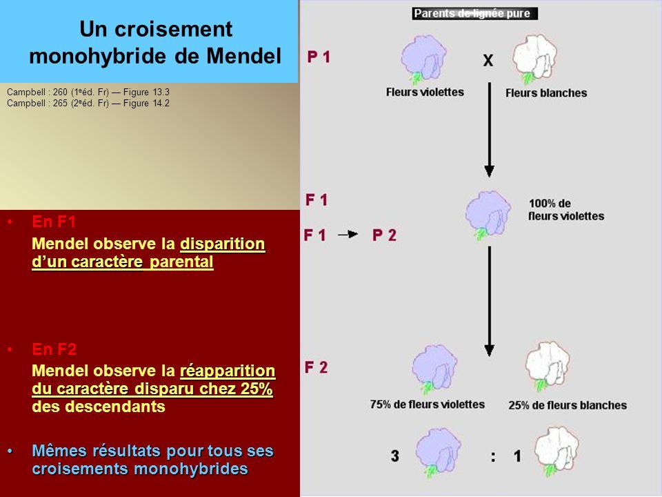 Un croisement monohybride de Mendel