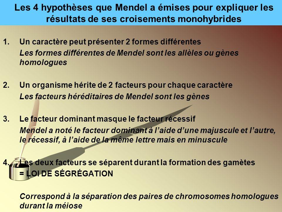 Les 4 hypothèses que Mendel a émises pour expliquer les résultats de ses croisements monohybrides
