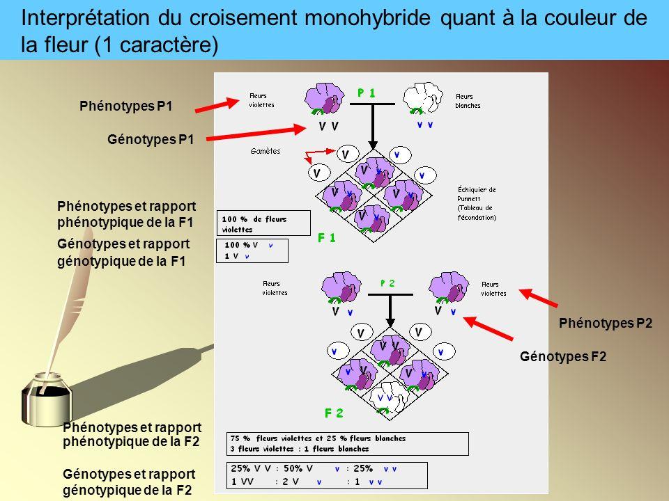 Interprétation du croisement monohybride quant à la couleur de la fleur (1 caractère)