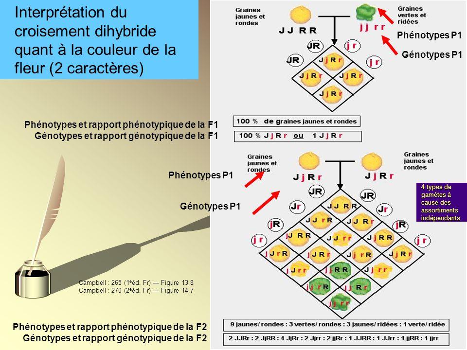 Interprétation du croisement dihybride quant à la couleur de la fleur (2 caractères)