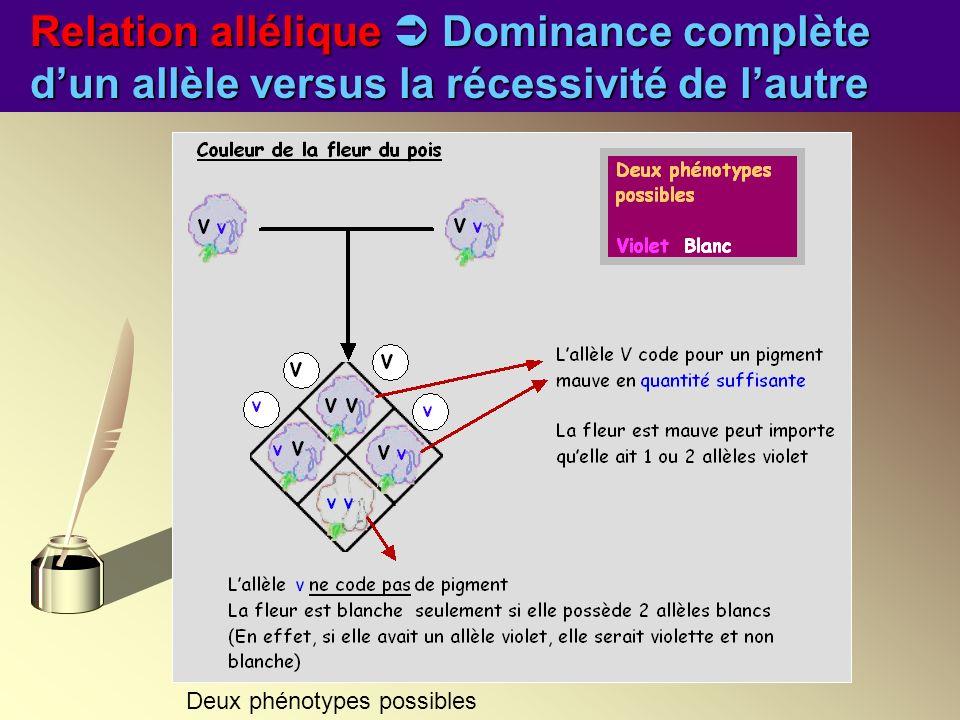 Relation allélique  Dominance complète d'un allèle versus la récessivité de l'autre
