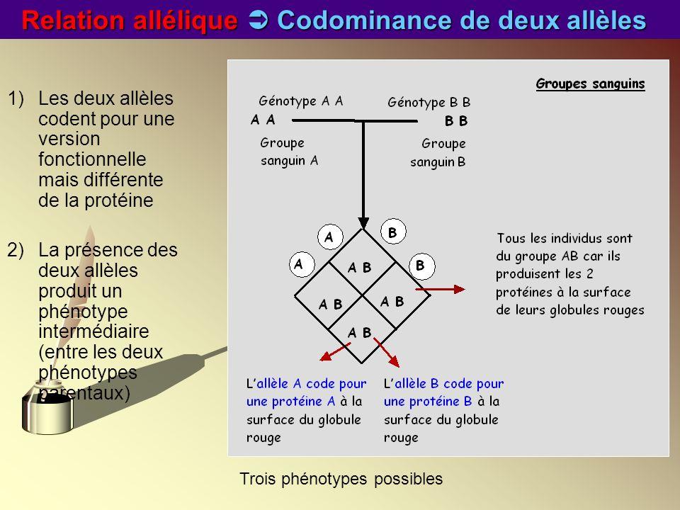 Relation allélique  Codominance de deux allèles