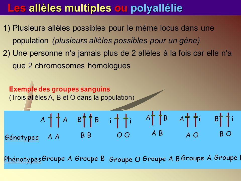 Les allèles multiples ou polyallélie