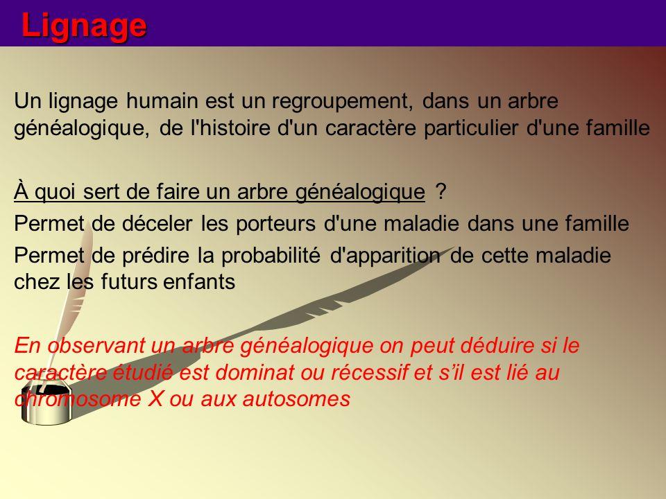 Lignage Un lignage humain est un regroupement, dans un arbre généalogique, de l histoire d un caractère particulier d une famille.