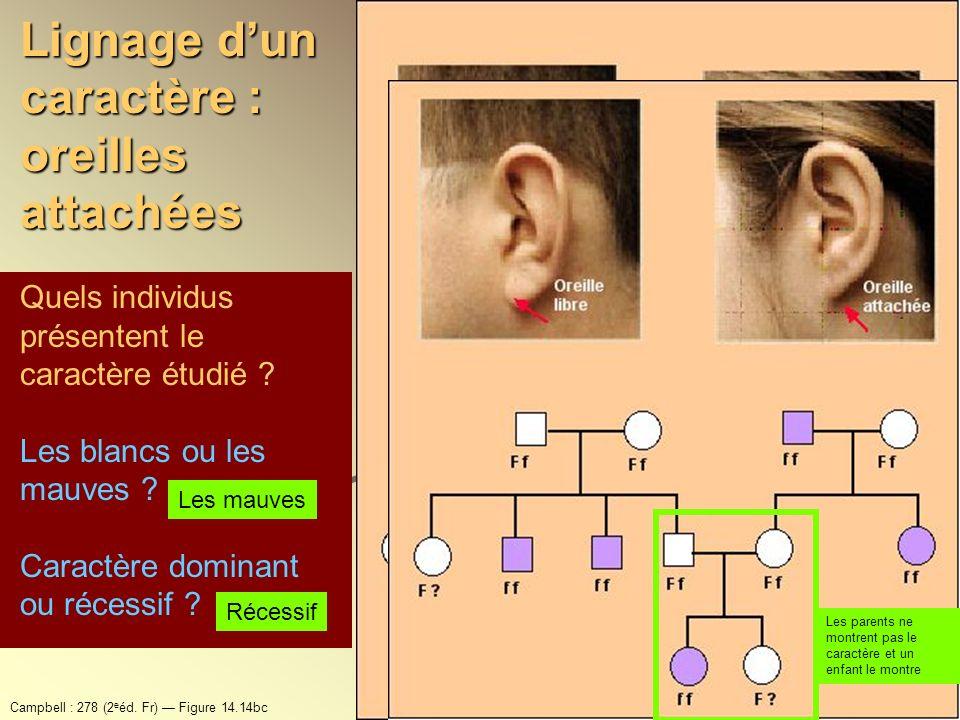 Lignage d'un caractère : oreilles attachées