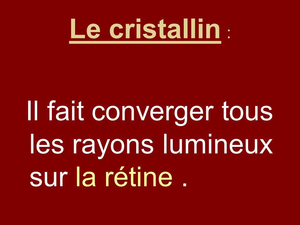 Le cristallin : Il fait converger tous les rayons lumineux sur la rétine .