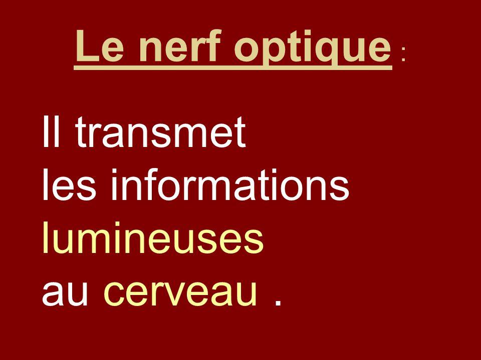 Le nerf optique : Il transmet les informations lumineuses au cerveau .