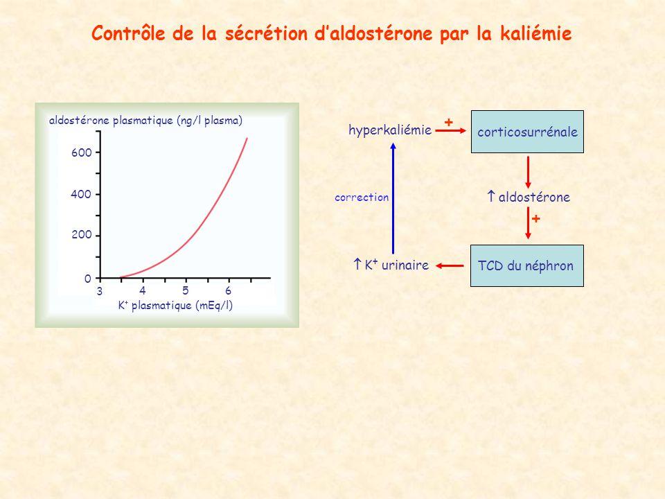 Contrôle de la sécrétion d'aldostérone par la kaliémie