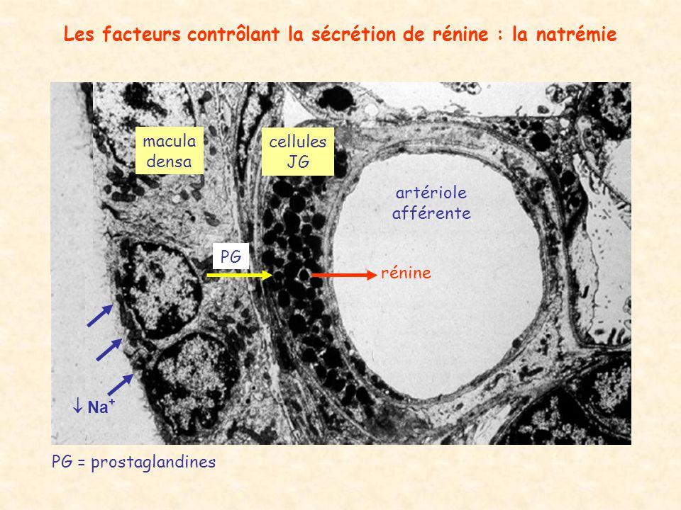 Les facteurs contrôlant la sécrétion de rénine : la natrémie
