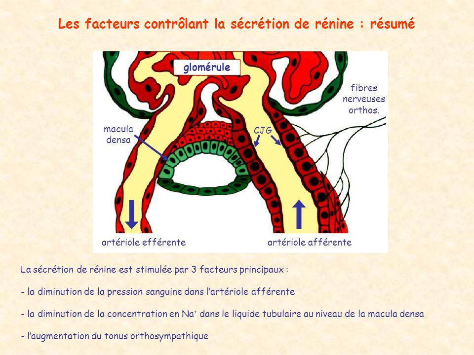 Les facteurs contrôlant la sécrétion de rénine : résumé