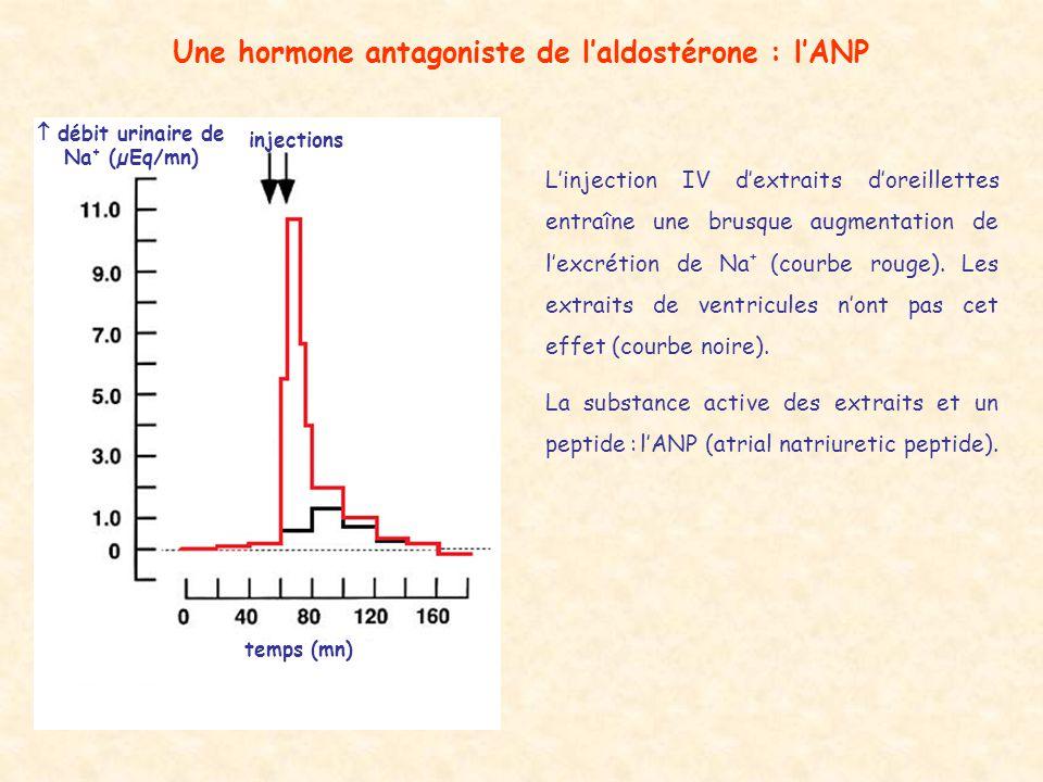 Une hormone antagoniste de l'aldostérone : l'ANP