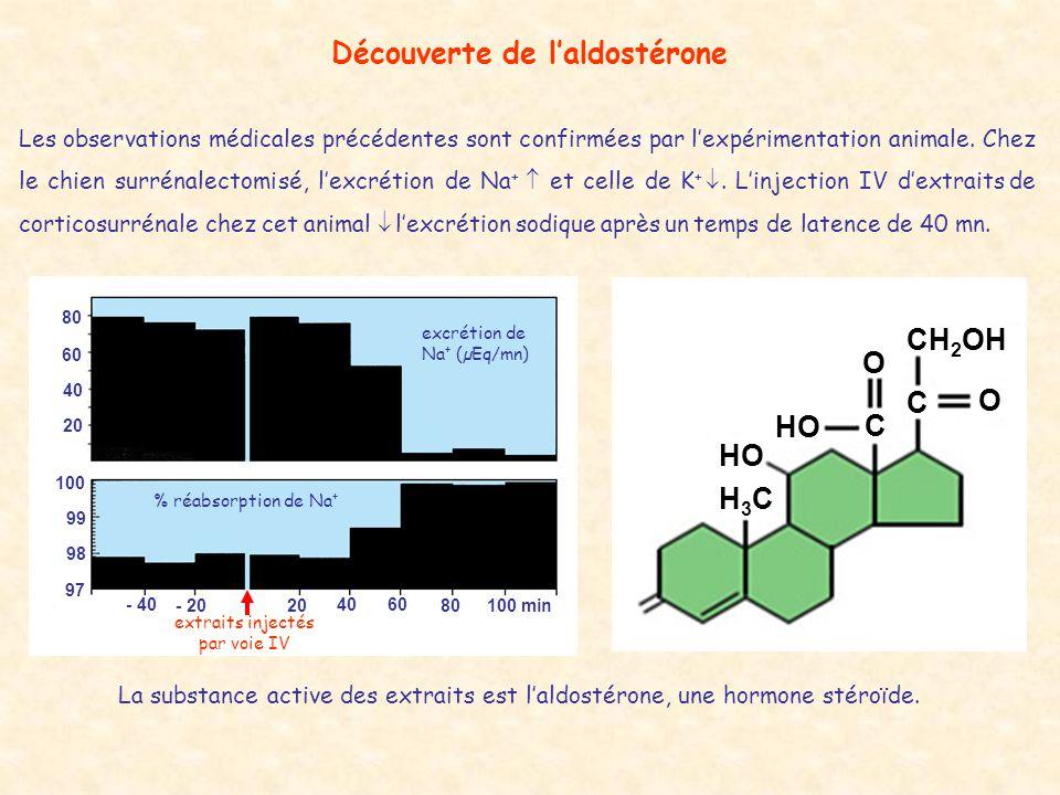 Découverte de l'aldostérone
