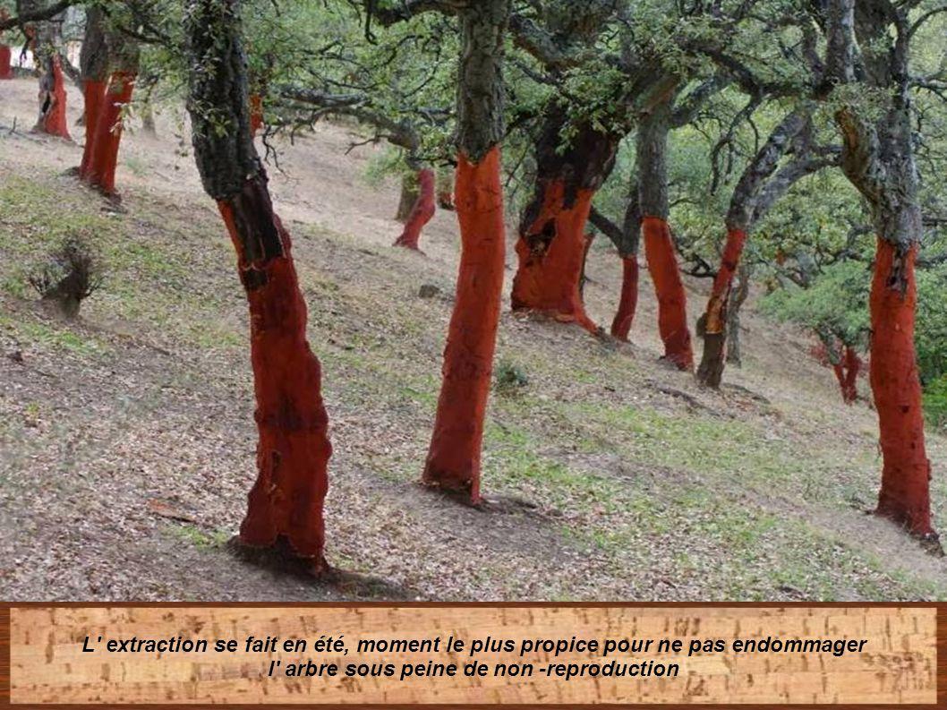l arbre sous peine de non -reproduction