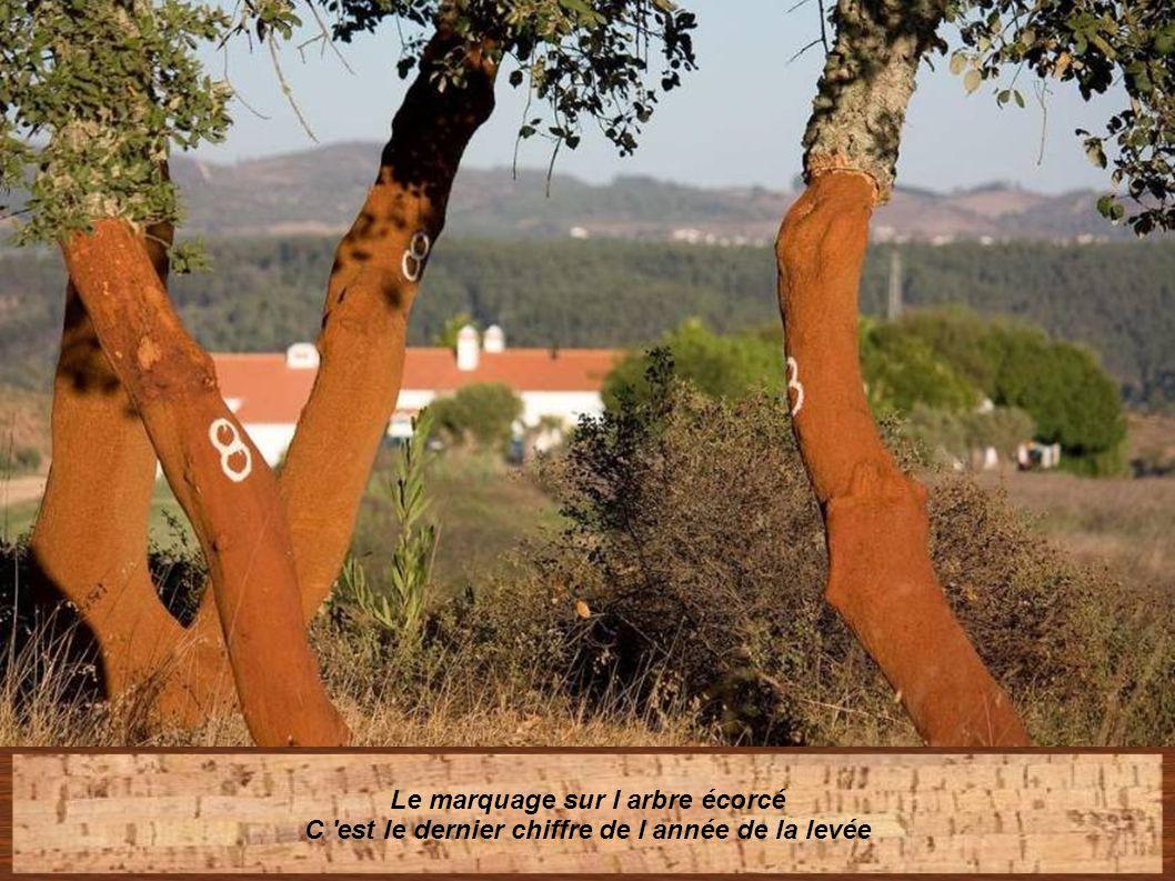 Le marquage sur l arbre écorcé