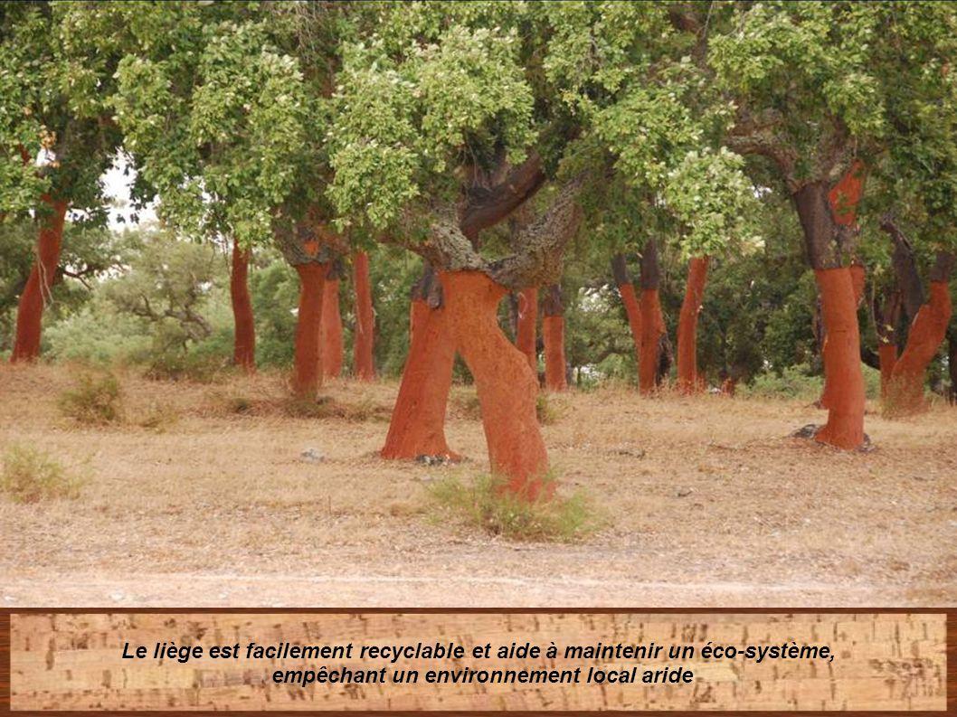 Le liège est facilement recyclable et aide à maintenir un éco-système,