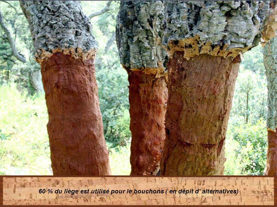 60 % du liège est utilisé pour le bouchons ( en dépit d alternatives)
