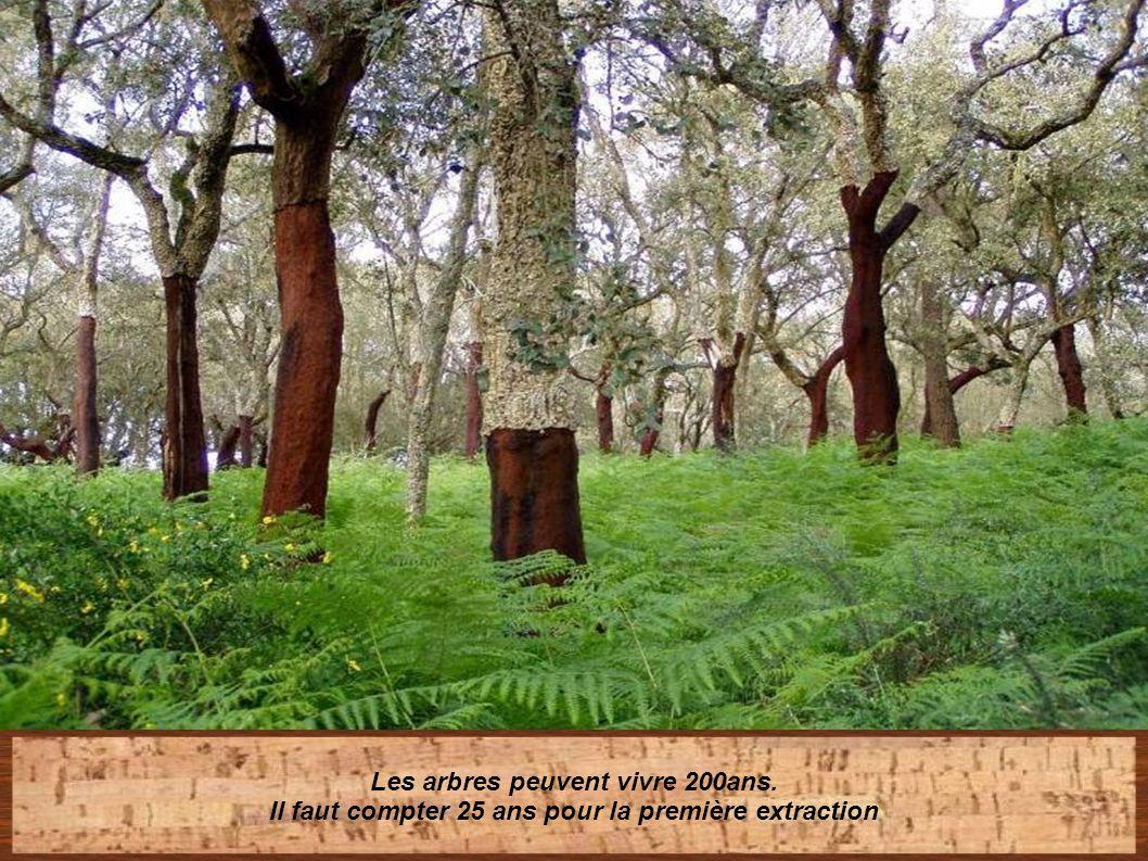 Les arbres peuvent vivre 200ans.