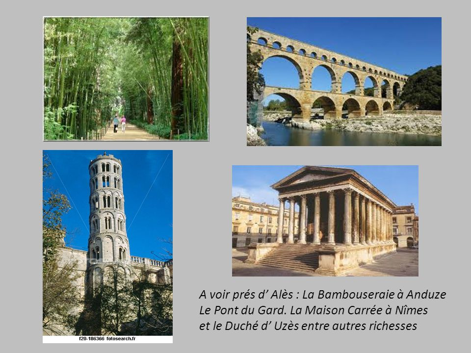 A voir prés d' Alès : La Bambouseraie à Anduze