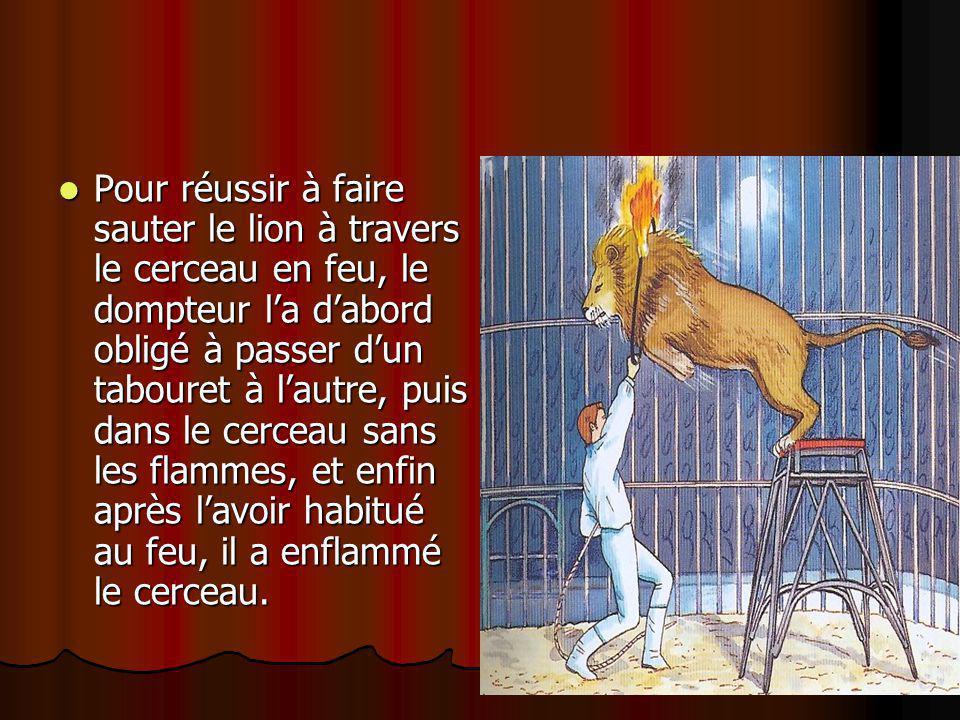 Pour réussir à faire sauter le lion à travers le cerceau en feu, le dompteur l'a d'abord obligé à passer d'un tabouret à l'autre, puis dans le cerceau sans les flammes, et enfin après l'avoir habitué au feu, il a enflammé le cerceau.