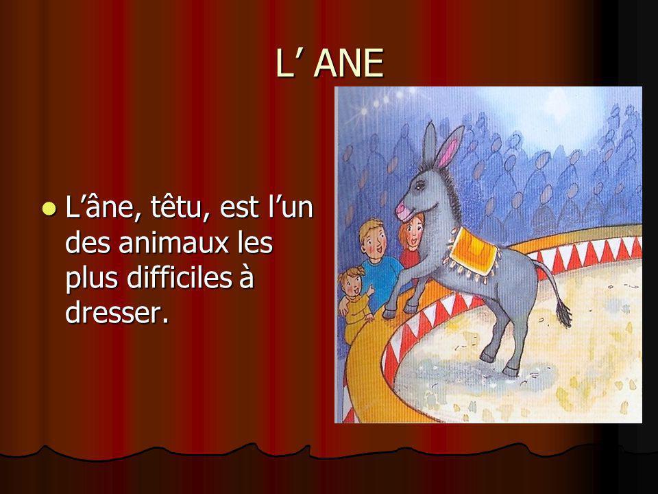 L' ANE L'âne, têtu, est l'un des animaux les plus difficiles à dresser.