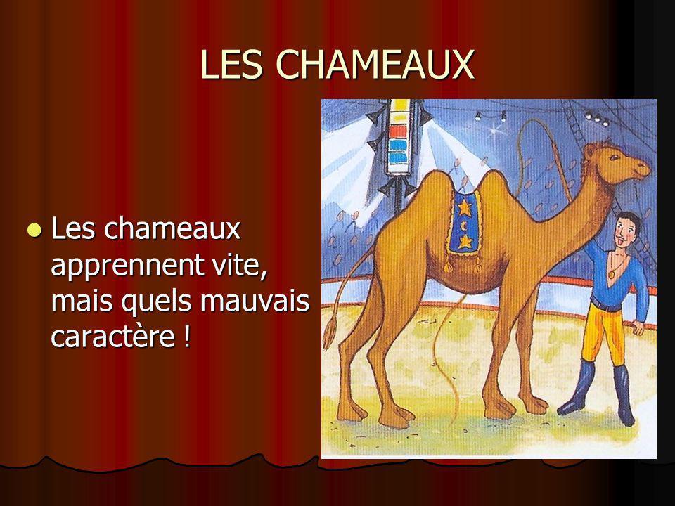 LES CHAMEAUX Les chameaux apprennent vite, mais quels mauvais caractère !