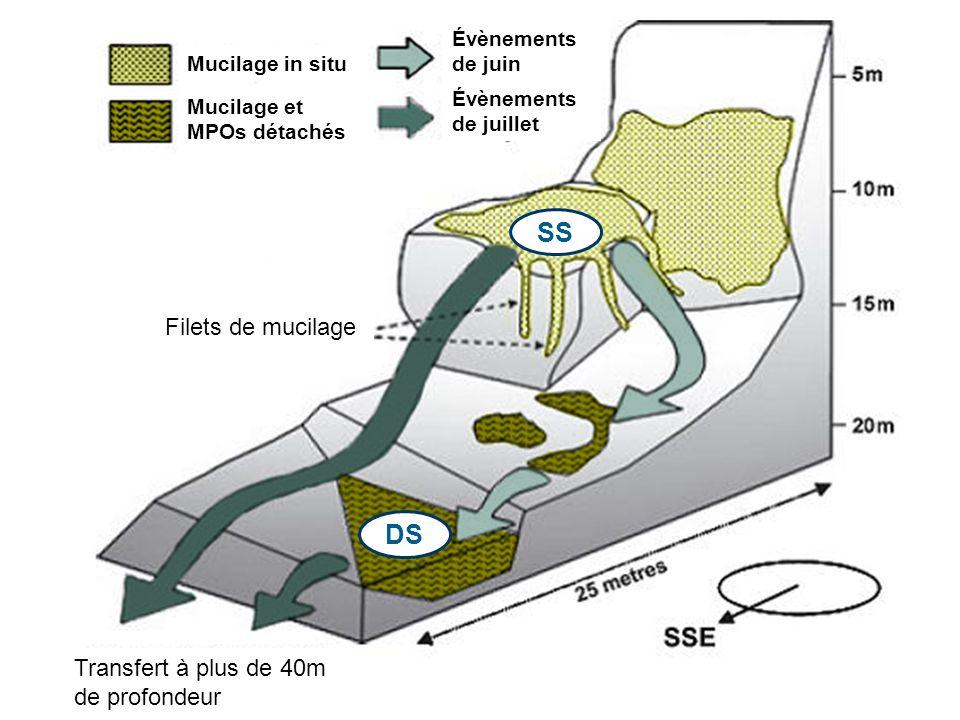 SS DS Filets de mucilage Transfert à plus de 40m de profondeur