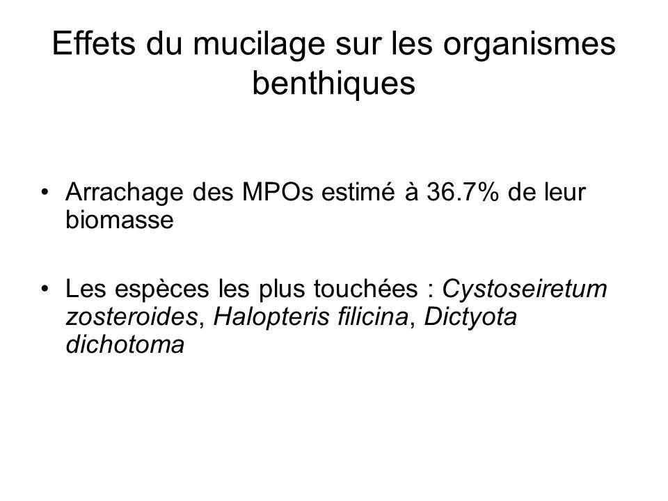 Effets du mucilage sur les organismes benthiques