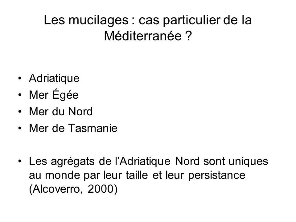 Les mucilages : cas particulier de la Méditerranée