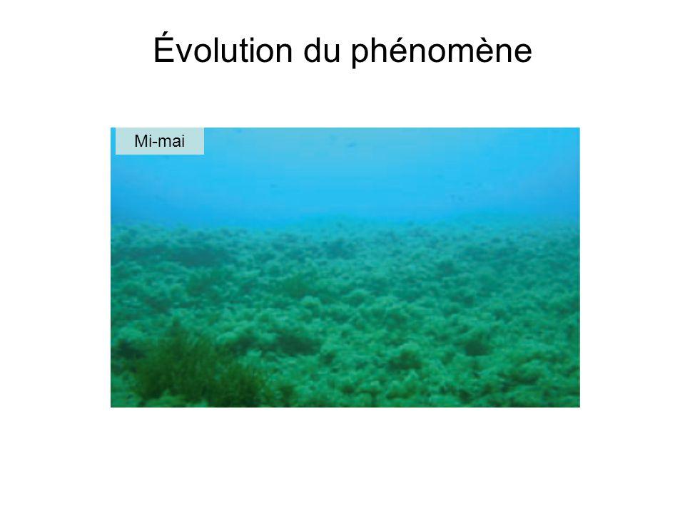 Évolution du phénomène
