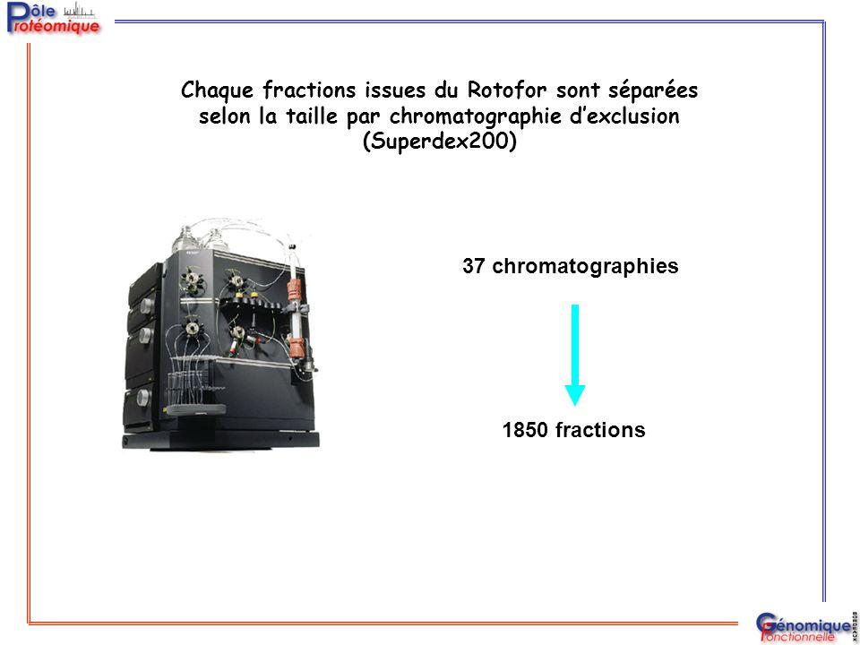 Chaque fractions issues du Rotofor sont séparées selon la taille par chromatographie d'exclusion (Superdex200)