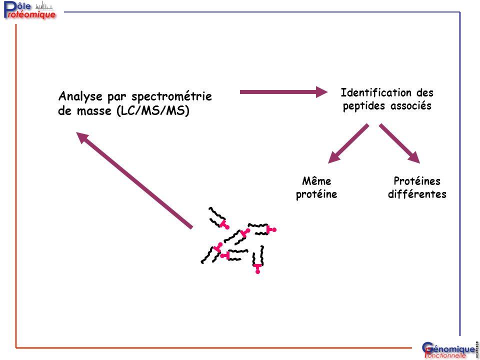 Identification des peptides associés