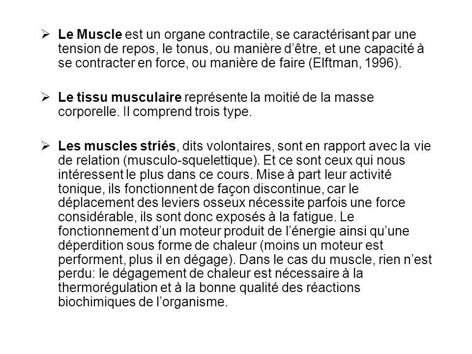Le Muscle est un organe contractile, se caractérisant par une tension de repos, le tonus, ou manière d'être, et une capacité à se contracter en force, ou manière de faire (Elftman, 1996).