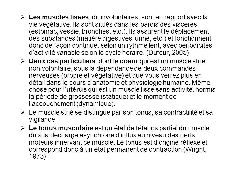 Les muscles lisses, dit involontaires, sont en rapport avec la vie végétative. Ils sont situés dans les parois des viscères (estomac, vessie, bronches, etc.). Ils assurent le déplacement des substances (matière digestives, urine, etc.) et fonctionnent donc de façon continue, selon un rythme lent, avec périodicités d'activité variable selon le cycle horaire. (Dufour, 2005)