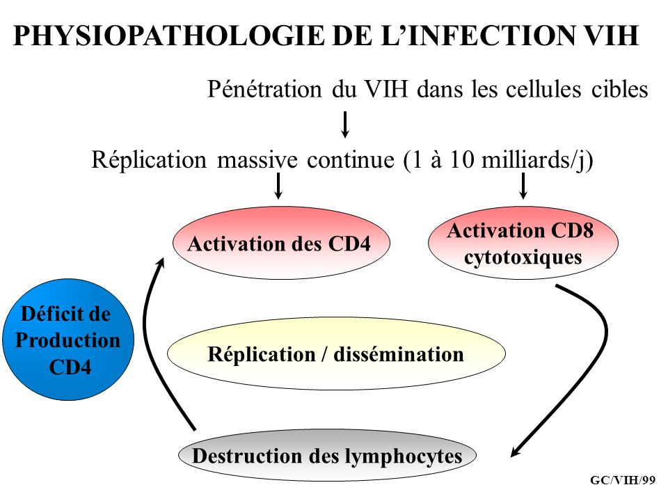 Réplication / dissémination Destruction des lymphocytes