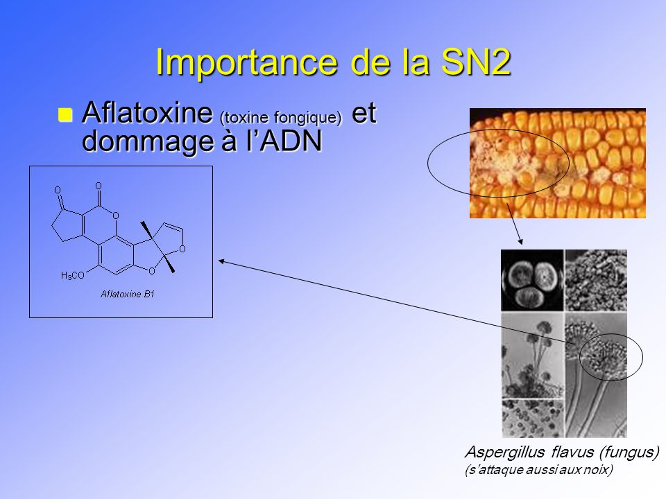 Importance de la SN2 Aflatoxine (toxine fongique) et dommage à l'ADN
