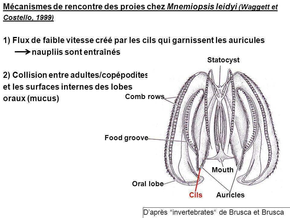 Mécanismes de rencontre des proies chez Mnemiopsis leidyi (Waggett et