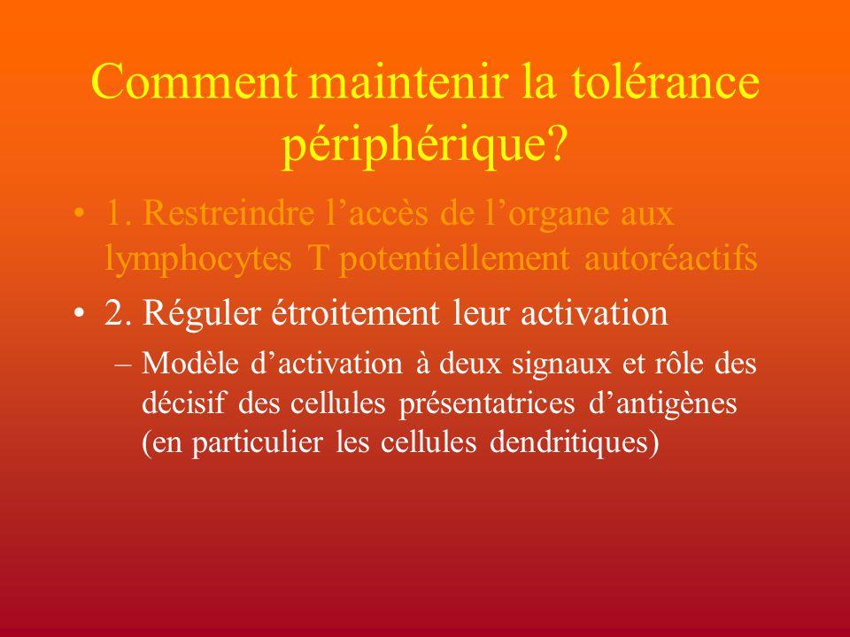 Comment maintenir la tolérance périphérique