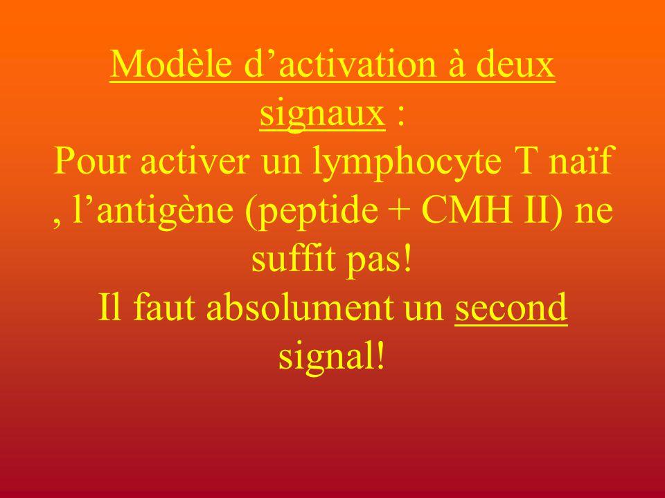 Modèle d'activation à deux signaux : Pour activer un lymphocyte T naïf , l'antigène (peptide + CMH II) ne suffit pas.