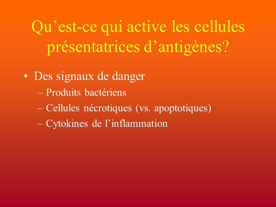 Qu'est-ce qui active les cellules présentatrices d'antigènes