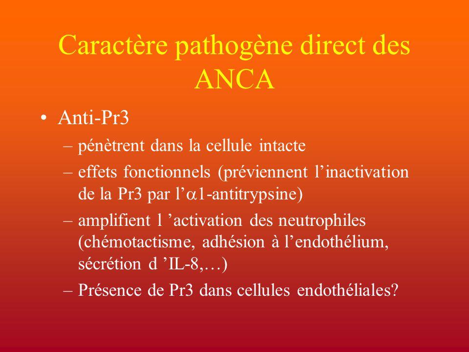 Caractère pathogène direct des ANCA