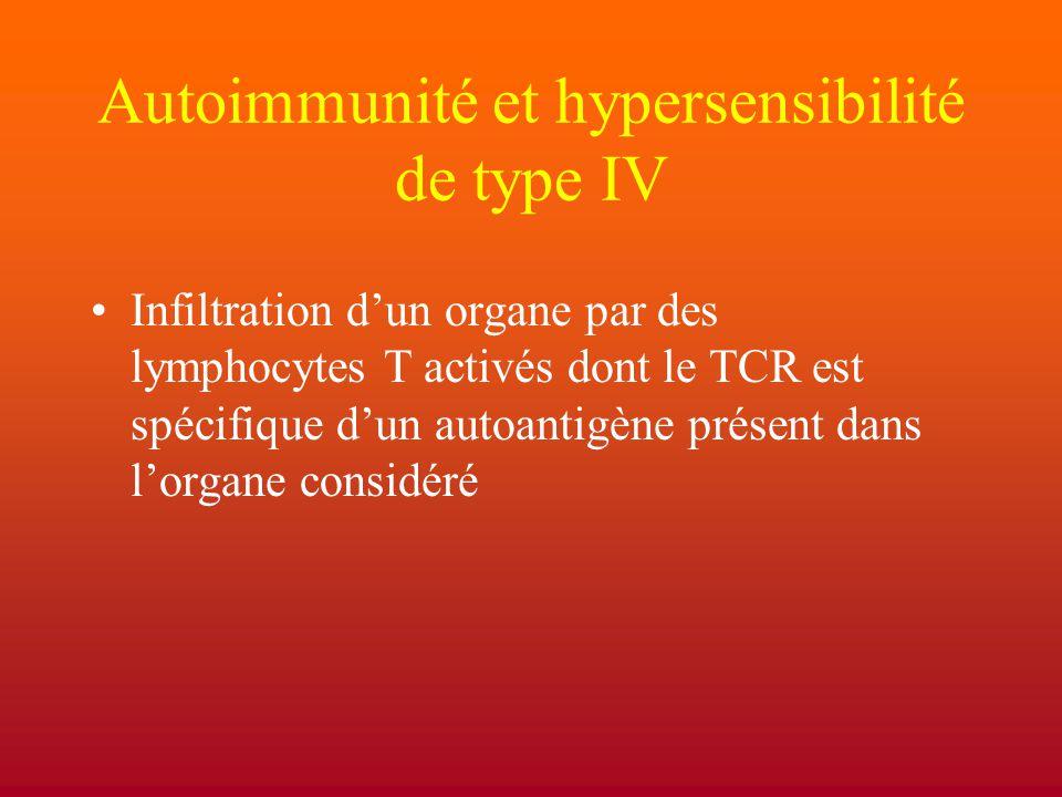 Autoimmunité et hypersensibilité de type IV