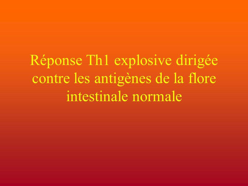 Réponse Th1 explosive dirigée contre les antigènes de la flore intestinale normale